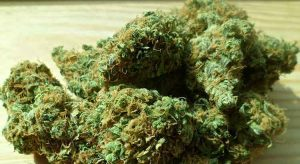 Education for cannabis1