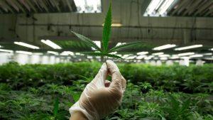 Marijuana seminar1