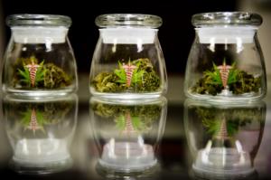 Medical cannabis seminars